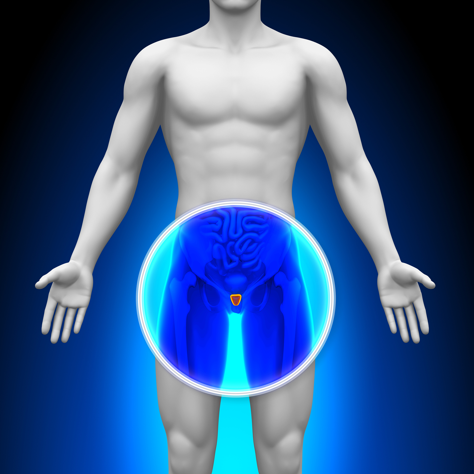 bigstock-Medical-X-Ray-Scan--Prostate-47708338