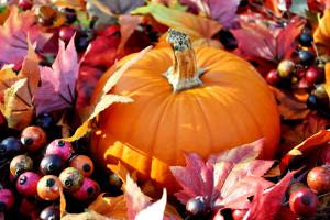 bigstock-Thanksgiving-Pumpkin-49944248